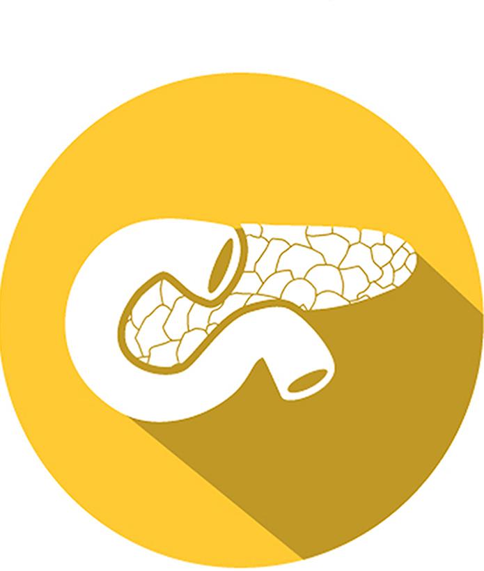Pancreas9